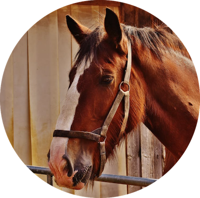 Pferd und CBD