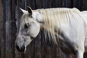 CBD Pferde